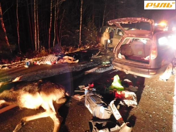 Лось бросился под «Фиат» впригороде Гродно, шофёр умер